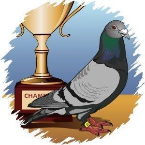 Pigeon Trophies
